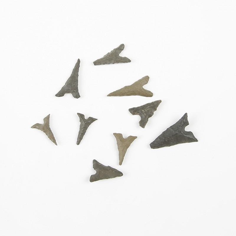 Prehistoric Baby Shark Teeth
